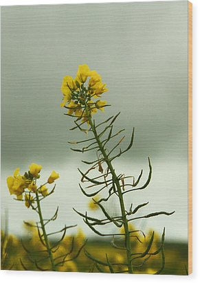 Yellow And Grey Wood Print by Jacqui Collett