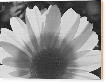 Yellow And White Flower Wood Print by John Noel