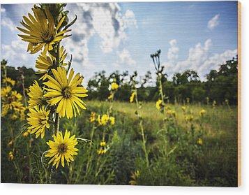 Yellow As The Sun Wood Print by CJ Schmit