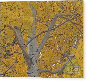 Yellow Aspen Autumn Tree Grand Teton National Park Wood Print by Nature Scapes Fine Art