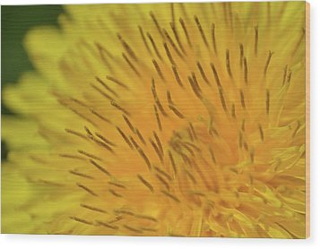 Wood Print featuring the photograph Yellow Beauty by JD Grimes