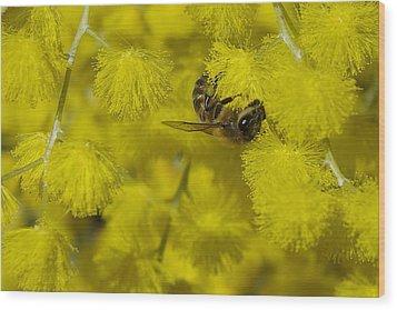 Yellow Bee Wood Print by Serene Maisey