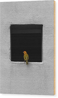 Yellow Birdie On The Window Sill Wood Print by Tracie Kaska