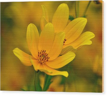 Wood Print featuring the photograph Yellow Blaze by Marty Koch