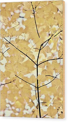Yellow Brown Leaves Melody Wood Print by Jennie Marie Schell
