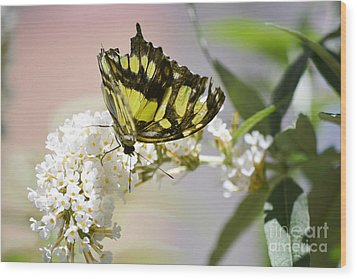 Yellow Butterfly Beauty Wood Print by Andrea Hazel Ihlefeld