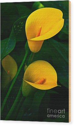 Yellow Calla Lilies Wood Print by Byron Varvarigos