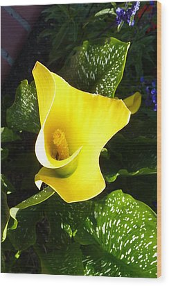 Wood Print featuring the photograph Yellow Calla Lily by Carla Parris