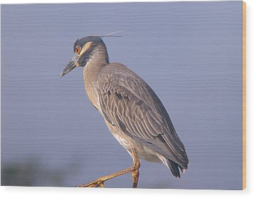 Wood Print featuring the photograph Yellow Crowned Night Heron by Brian Wright
