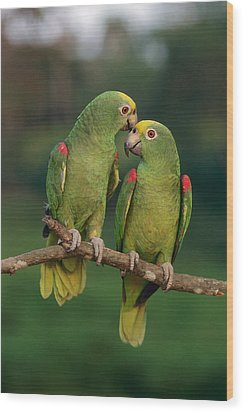 Yellow-crowned Parrot Amazona Wood Print by Thomas Marent