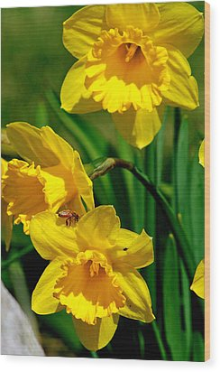 Wood Print featuring the photograph Yellow Daffodils And Honeybee by Kay Novy