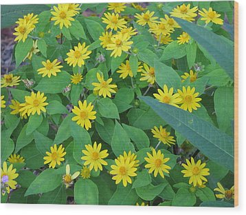 Yellow Daisies Wood Print by RobLew Photography