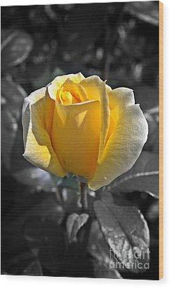 Yellow English Rose Vertical Wood Print by Stephen Clarridge