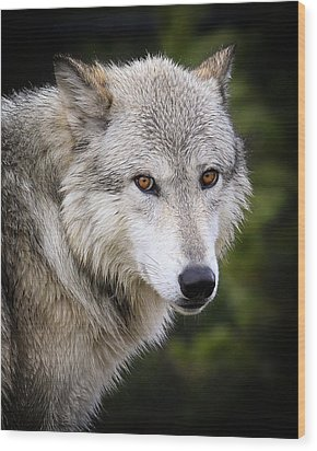 Wood Print featuring the photograph Yellow Eyes by Steve McKinzie