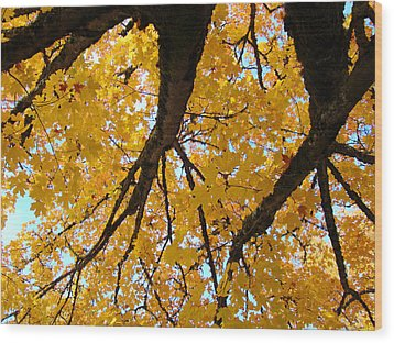 Yellow Fall Trees Prints Autumn Leaves Wood Print by Baslee Troutman