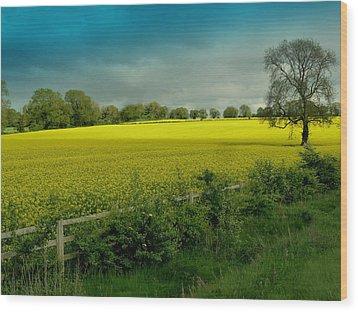 Yellow Field Wood Print by Debra Collins