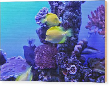 Yellow Fish With Purple Coral Wood Print by Linda Phelps