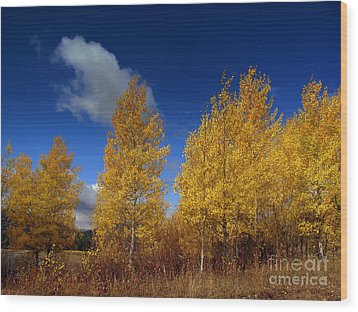 Wood Print featuring the photograph Yellow Flash by Irina Hays