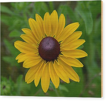 Wood Print featuring the photograph Yellow Flower by Brian Hughes