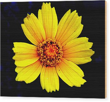 Yellow Flower Wood Print by Marty Koch