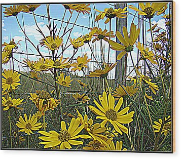 Wood Print featuring the photograph Yellow Flowers By The Roadside by Alice Gipson