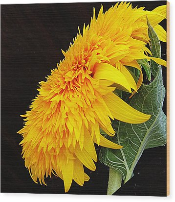 Wood Print featuring the photograph Yellow Flowers by Elvira Ladocki