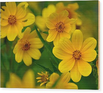 Yellow Flowers Wood Print by Marty Koch