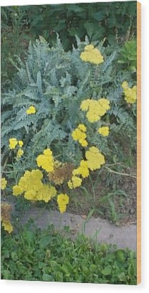 Yellow Garden Flowers And Green Ferns Wood Print by Thelma Harcum