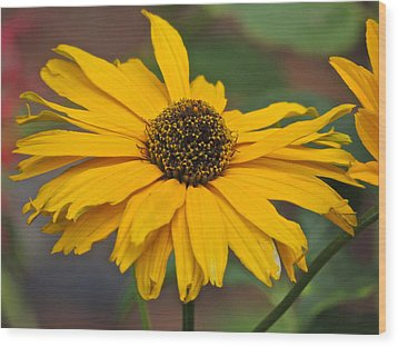 Wood Print featuring the photograph Yellow Gerber Daisy by Eve Spring