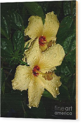 Wood Print featuring the photograph Yellow Hibiscus After The Rain by Renee Trenholm