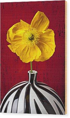 Yellow Iceland Poppy Wood Print by Garry Gay