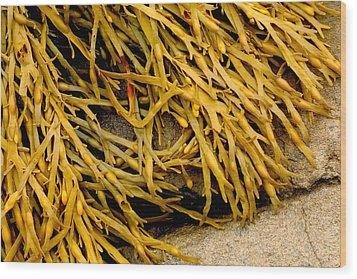Yellow Kelp Wood Print by Brent L Ander