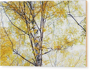 Yellow Lace Of The Birch Foliage  Wood Print by Jenny Rainbow
