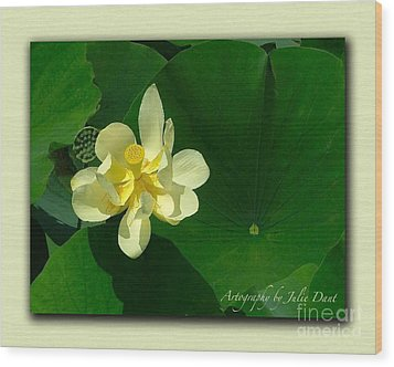 Yellow Lotus Blossom In Mississippi  Wood Print by Julie Dant