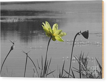 Wood Print featuring the photograph Yellow Lotus by Deborah Smith