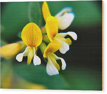Wood Print featuring the photograph Yellow Macro by Wendy McKennon