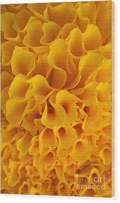 Yellow Marigold Macro View Wood Print by Atiketta Sangasaeng