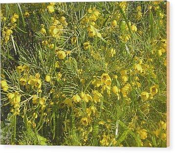Yellow Mesquite Wood Print