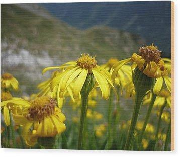 Yellow Mountain Flowers Wood Print by Martin Marinov