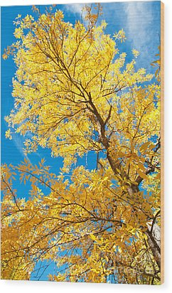 Yellow On Blue Wood Print by Bob and Nancy Kendrick