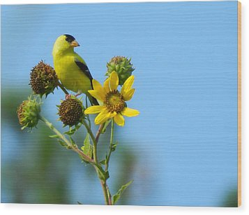 Yellow On Yellow Wood Print by Don L Williams