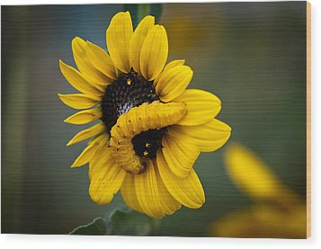 Wood Print featuring the photograph Yellow On Yellow by Monte Stevens