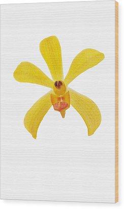 Yellow Orchid Wood Print by Atiketta Sangasaeng