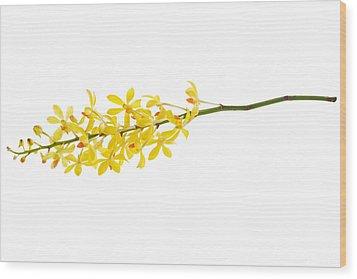 Yellow Orchid Bunch Wood Print by Atiketta Sangasaeng