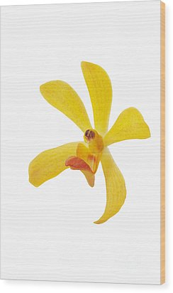 Yellow Orchid Head Wood Print by Atiketta Sangasaeng