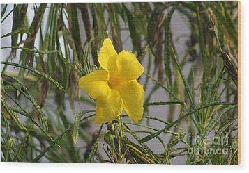 Wood Print featuring the digital art Yellow Orchid by John  Kolenberg