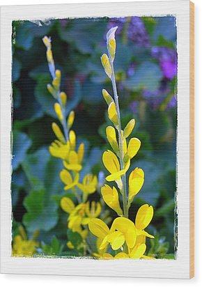 Yellow Plumes Wood Print by Judi Bagwell