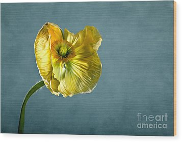 Yellow Poppy Wood Print by Nailia Schwarz