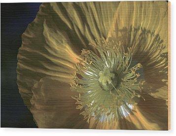 Yellow Poppy Shine Wood Print