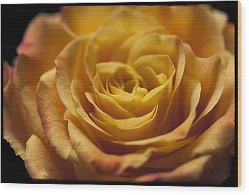 Yellow Rose Bud Wood Print by Zoe Ferrie